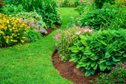 Perennial flower beds with lilies, hosta and bleeding hearts.